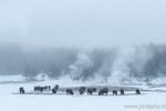 Yellowstone winter b